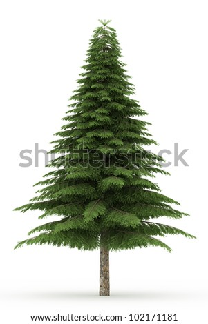 3d spruce  tree isolated over white - stock photo