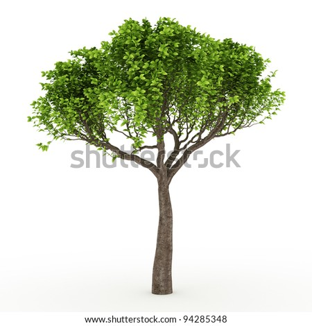 3d tree isolated on white - stock photo