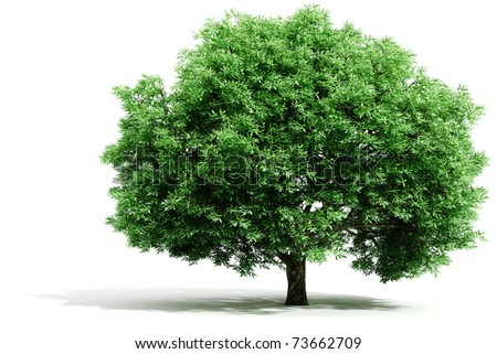 3d tree render on white background - stock photo