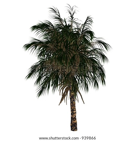 3D Tree Series - Palm Tree (White Background is a separated layer)