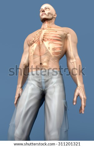 3D visualization of the human anatomy. The Internal Organs in a semi transparent male body.  - stock photo