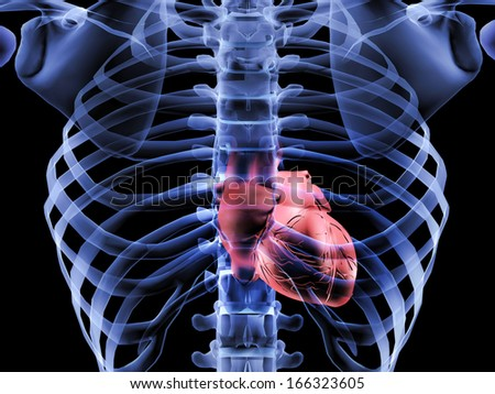 3D X-Ray image of human body and heart anatomy - stock photo