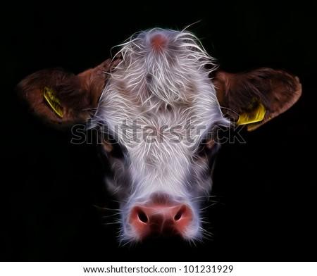 Daisy A Cow,cow face - stock photo