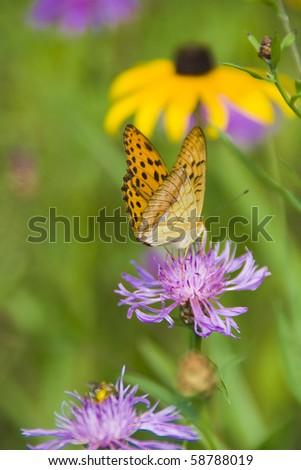 """Damora sagana"" butterfly on green background - stock photo"