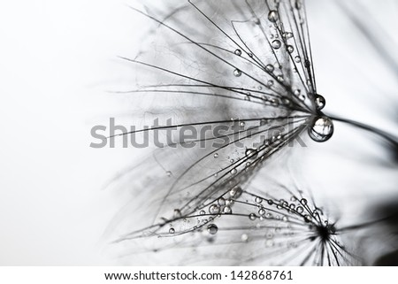 dandelion flower background, extreme closeup - stock photo