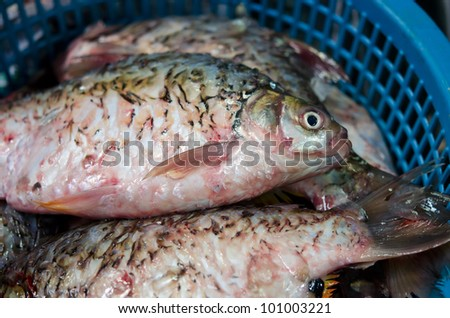 Death fish selling in the market of Thailand. Ready to be slaughter and sell for ingredients.
