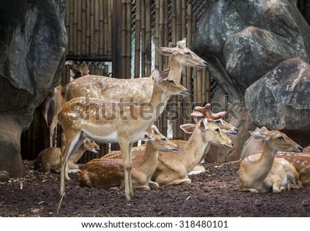 deer cute - stock photo