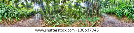 360 degree panorama of Jamaican forest - stock photo