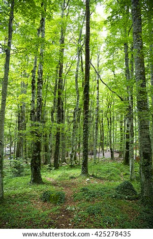 Dense forest in Montenegro in the summer.