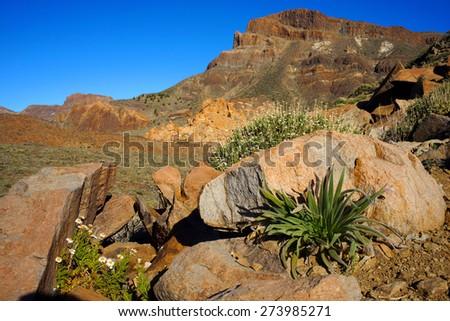 Desert Life Detail                       - stock photo