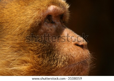 detail of the glance a monkey