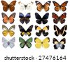 12 different butterflies - stock photo