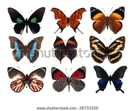 9 different butterflies