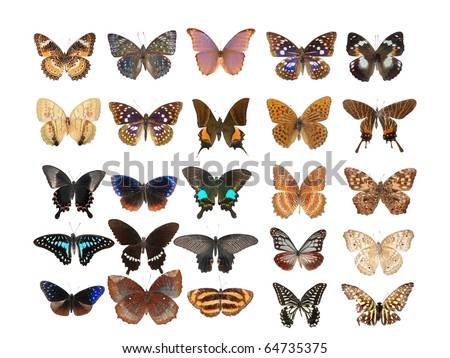 25 different butterfly set collection - stock photo