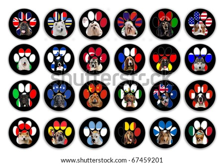 24 different dog breeds buttons isolated on whit background - stock photo