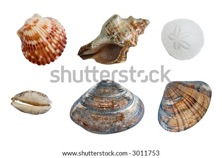 6 different types of seashells on white complete with clipping paths for each individual shell.