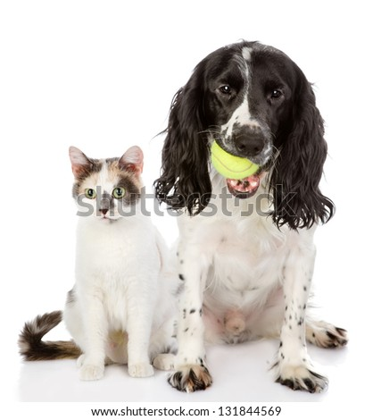 dog and cat. looking at camera. isolated on white background