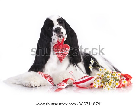 dog holding a toy heart in the mouth - stock photo