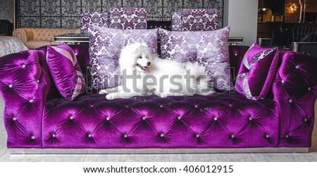 Dog on the purple couch eclectic luxury