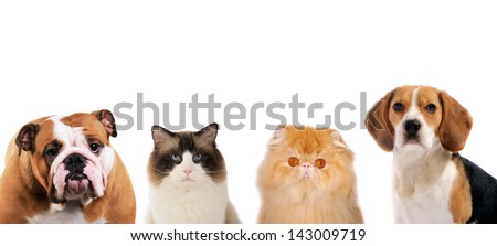 2 dogs and 2 cats portraits looking strait forward, on white isolated background. - stock photo