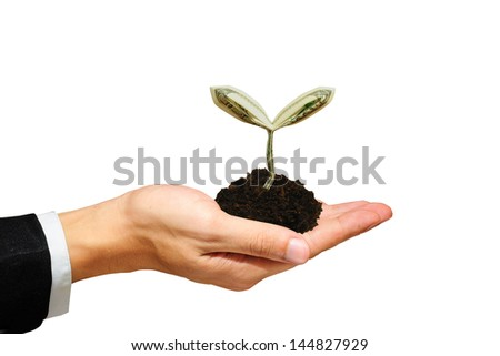 100 dollar sprout on hand with isolate white background - stock photo