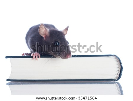 domestic rat sitting on book