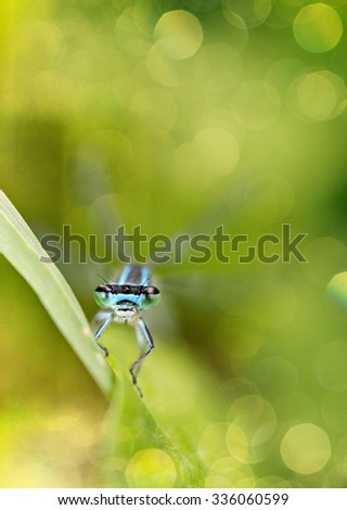 Dragonfly sitting on blade of grass removed from front with shallow depth of field.