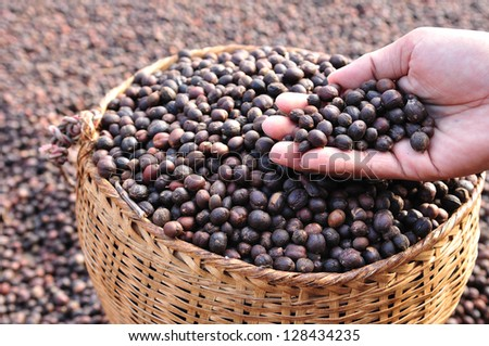 dried  berries coffee beans on hands - stock photo