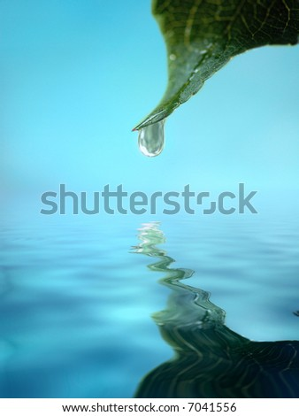drop on leaf tip reflecting on water  surface