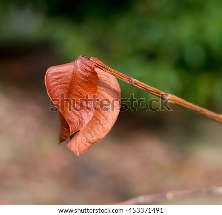 Dry autumn leaf background,Brown dry leaf background, vein on autumnal foliage, natural pattern, textured wallpaper, beauty of nature detail, change of season concept - stock photo