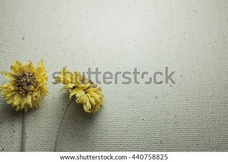 Dry flower on canvas fabric background  - stock photo
