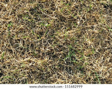 dry grass as background