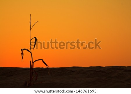 Dune view morning silhouettes landscape - stock photo