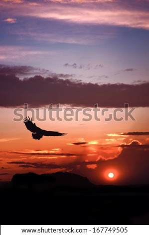 Eagle silhouette flying on dramatic sunset background                               - stock photo