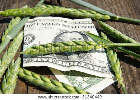 Ear of wheat and one dollar - stock photo