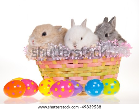 3 Easter bunnies in basket, on white background