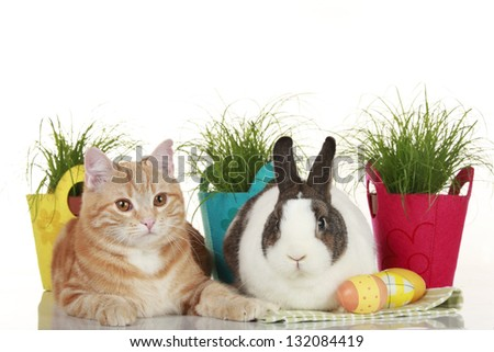 easter bunny and red cat with easter eggs - stock photo