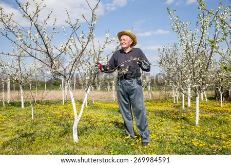 Elderly man in flowered cherry orchard. Selective focus - stock photo