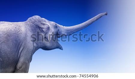 Elephant on blue background - stock photo