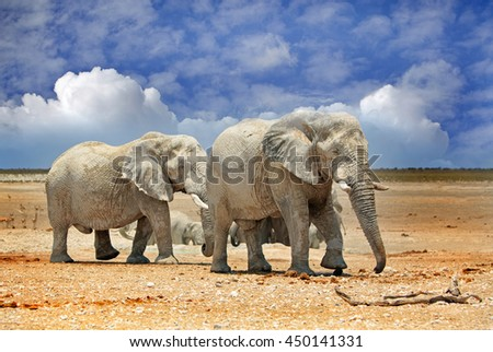 2 elephants next to a waterhole with a blue cloudy sky background