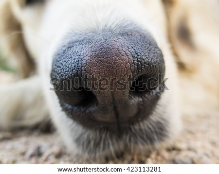 Extreme close up of a cute dog nose                               - stock photo