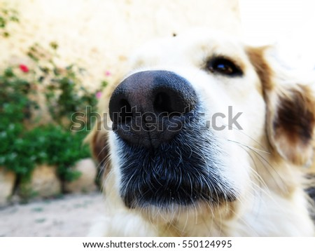 Extreme close up of a cute dog nose