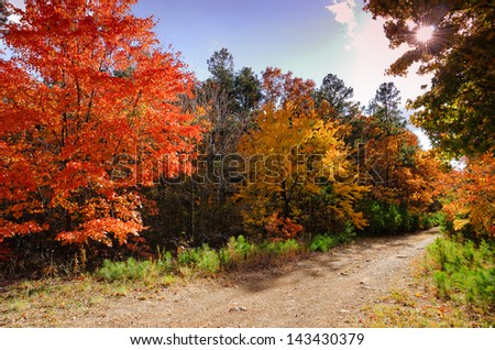 """Fall in the Talimena Scenic Byway""  - stock photo"