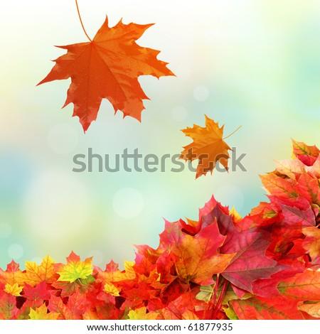 falling fall leaves - stock photo