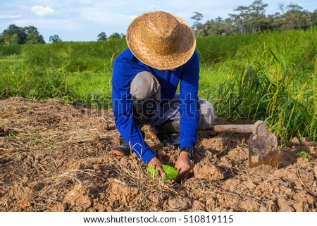 farmer in a field holding crop in his hands