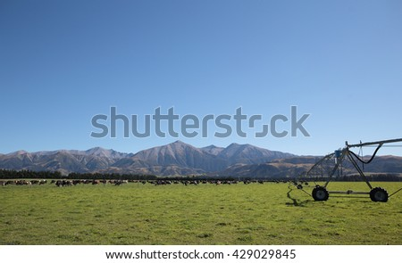 Field irrigated by a pivot sprinkler system with herds cow and Mountain Background in NZ Country - stock photo