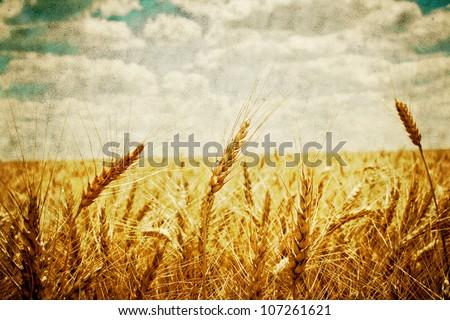 field of grass. retro meadow wheat under sky - stock photo