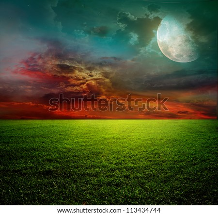 field of spring grass and sunset