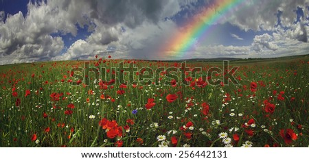 Field with bright blooming poppies in Ukraine, of Europe, very beautiful natural phenomenon in the early leta.Eto favorite subject for painters, artists, photographers, working on his background. - stock photo