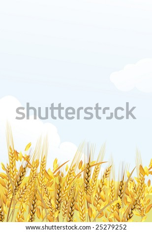 field with ears - stock photo